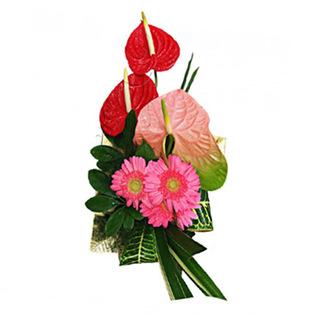 Anthurium Flowers to  Bnagalore