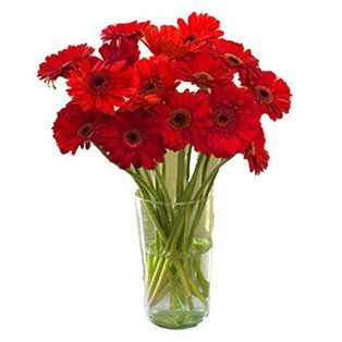 Red  Gerbera Flowers to Bnagalore