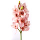 Pink Orchid Bunch