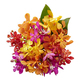 Mixed Orchids Stems