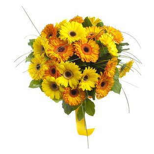 Yellow Gerbera Flowers to Bnagalore
